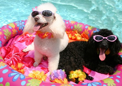 10 Fun Ideas for a Puppy Pool Party
