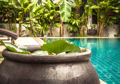 Add a Pool Garden for Instant Peace and Comfort